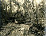 LU-157.0011 - Branch in woods near Rochelle by John Chester Mattoon