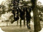 LU-157.0016 - John Mattoon, Elmer E. Jones, and Henry Morton hanging from tree branch by John Chester Mattoon