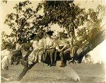 LU-157.0017 - John Mattoon, Elmer E. Jones, and students sitting on tree branch by John Chester Mattoon