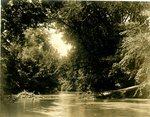 LU-157.0079 - Appomattox River, near Jackson's Dam, Farmville, VA by John Chester Mattoon