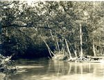 LU-157.0081 - Appomattox River, 2 miles above Jackson's Dam, from right bank by John Chester Mattoon