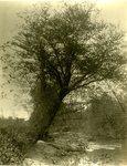 LU-157.0084 - Appomattox River, toward Cumberland Bridge from above, near Farmville, VA by John Chester Mattoon