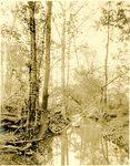 LU-157.0089 - Appomattox River by John Chester Mattoon