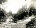 LU-157.0090 - Appomattox River, near Farmville, VA by John Chester Mattoon