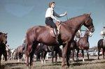 LU-120.077 - Jousting Tournament, Horse Parade, 1956
